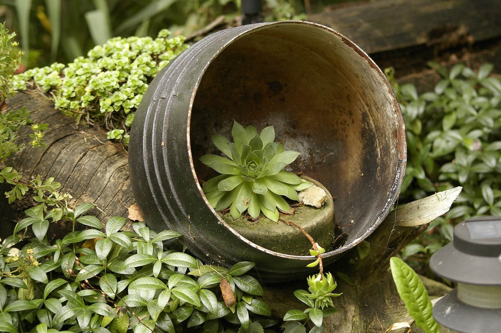 LandscapingPlanting Ideas